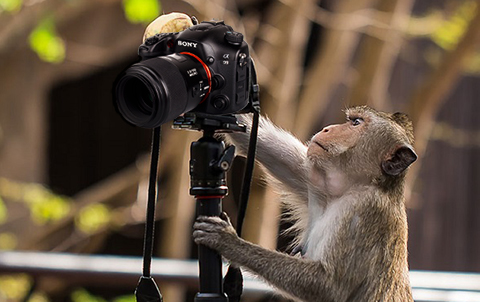 How to do Sports Photography Sony Monkey Chimping Photos