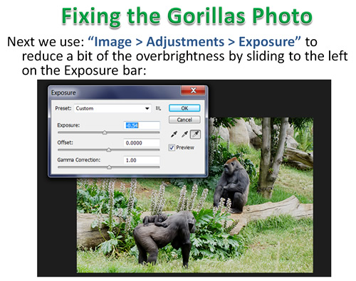 How to Photoshop Animals 05