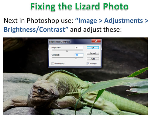 How to Photoshop Animals 14
