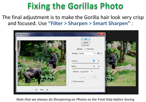 How to Photoshop Animals 09