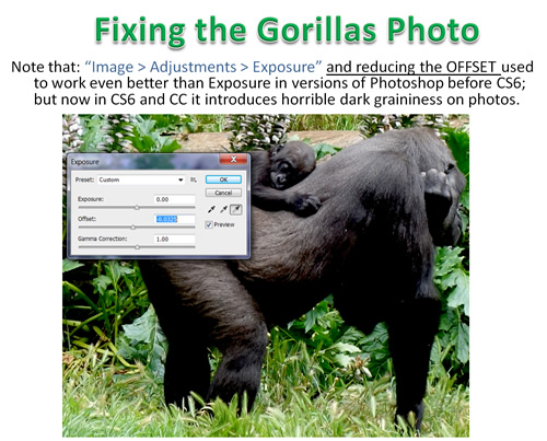 How to Photoshop Animals 06
