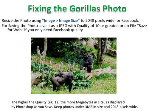 How to Photoshop Animals 10