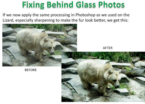 How to Photoshop Animals 20