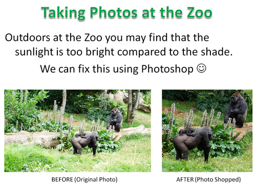 How to Photoshop Animals 02